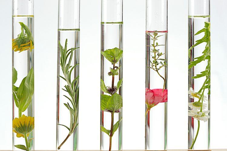 Aromathérapie, les huiles essentielles qui font maigrir?